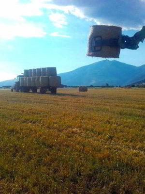 pelechras-hay-for-sheeps